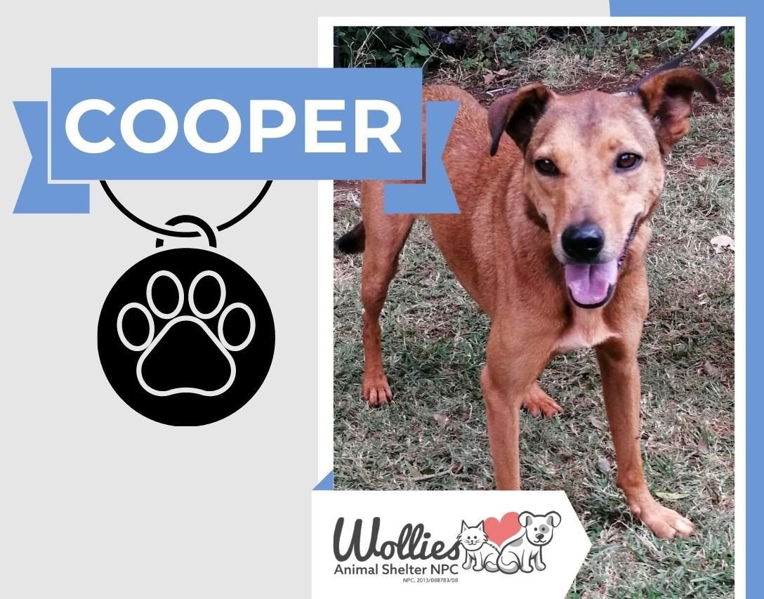 Slider COOPER