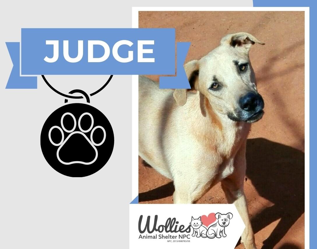 Slider JUDGE