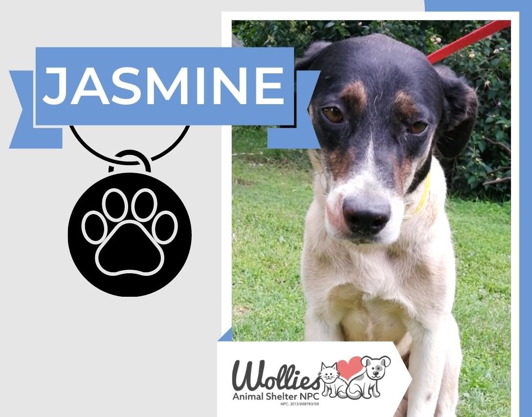 Slider Jasmine