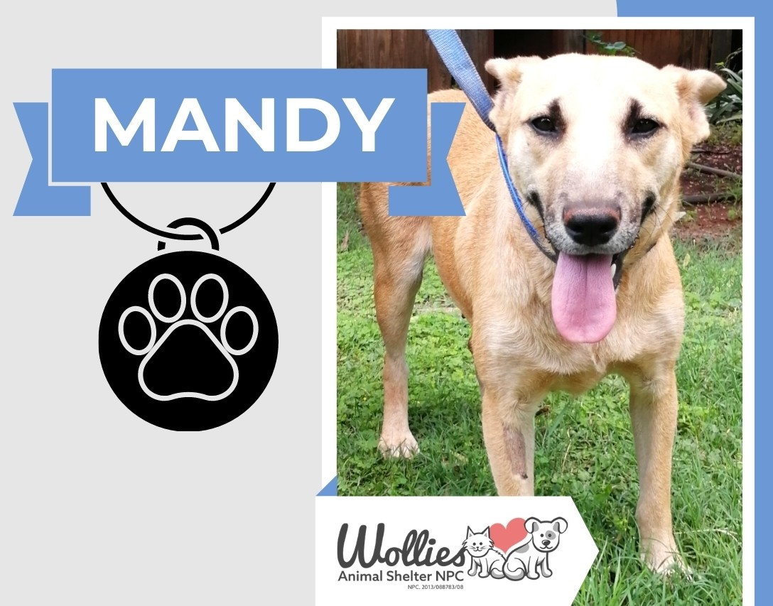 Slider MANDY